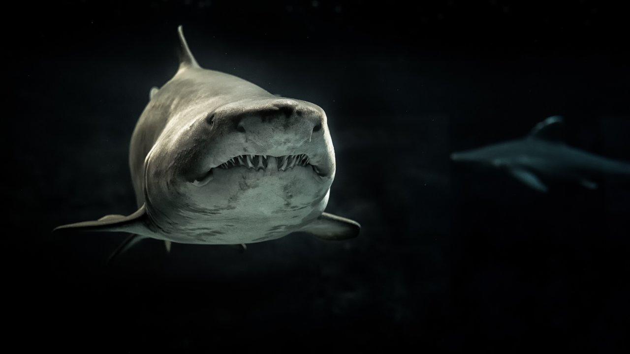 requin-environnement-ocean