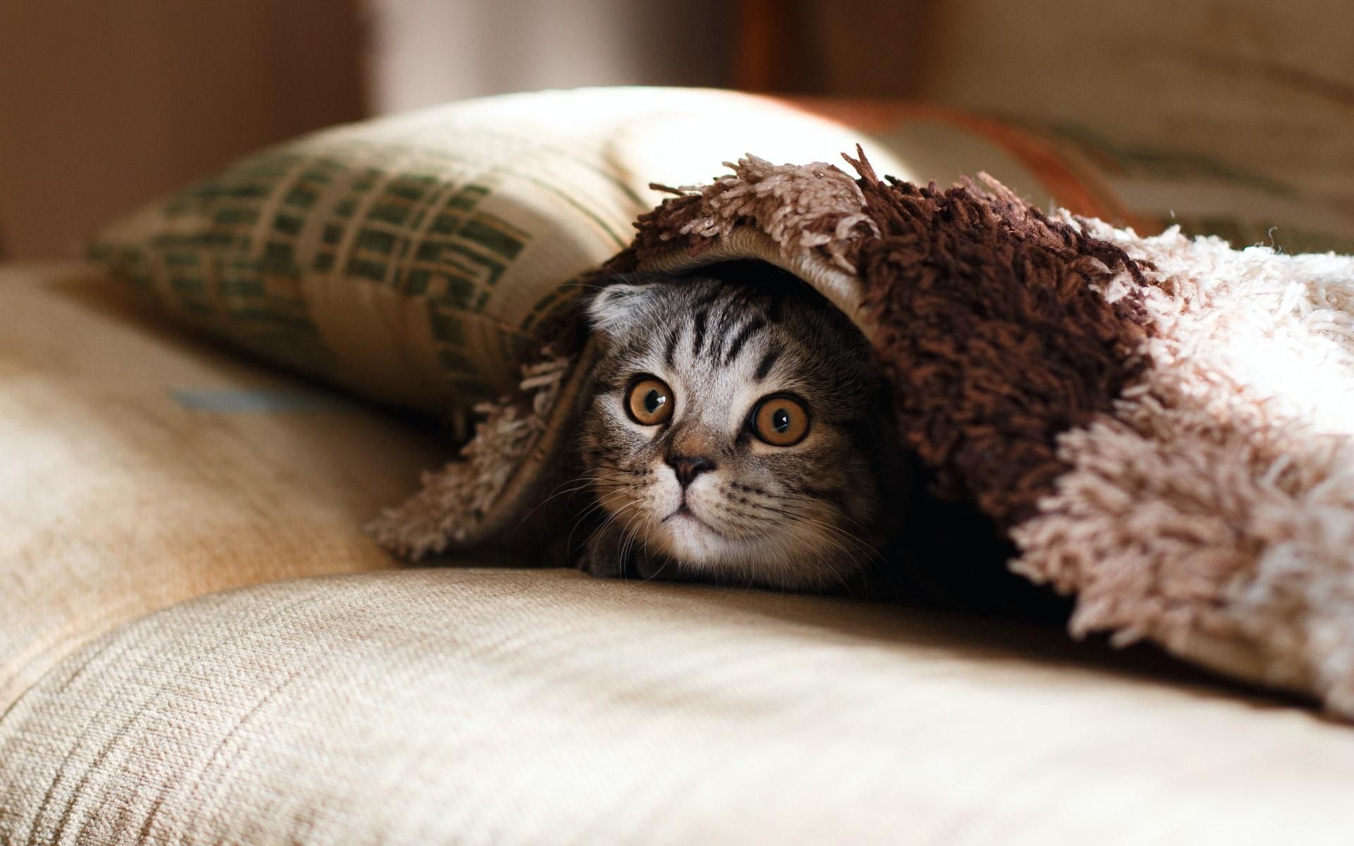 Un chat caché sous une couette