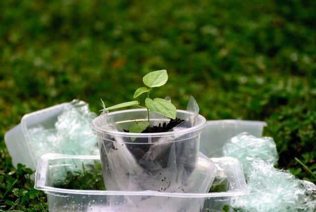 Une plante qui pousse dans un gobelet plastique