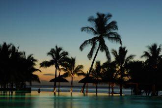 Une photo montrant des palmiers de l'île Maurice
