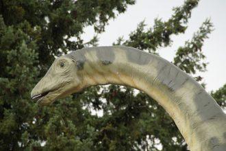 Un dinosaure au long cou
