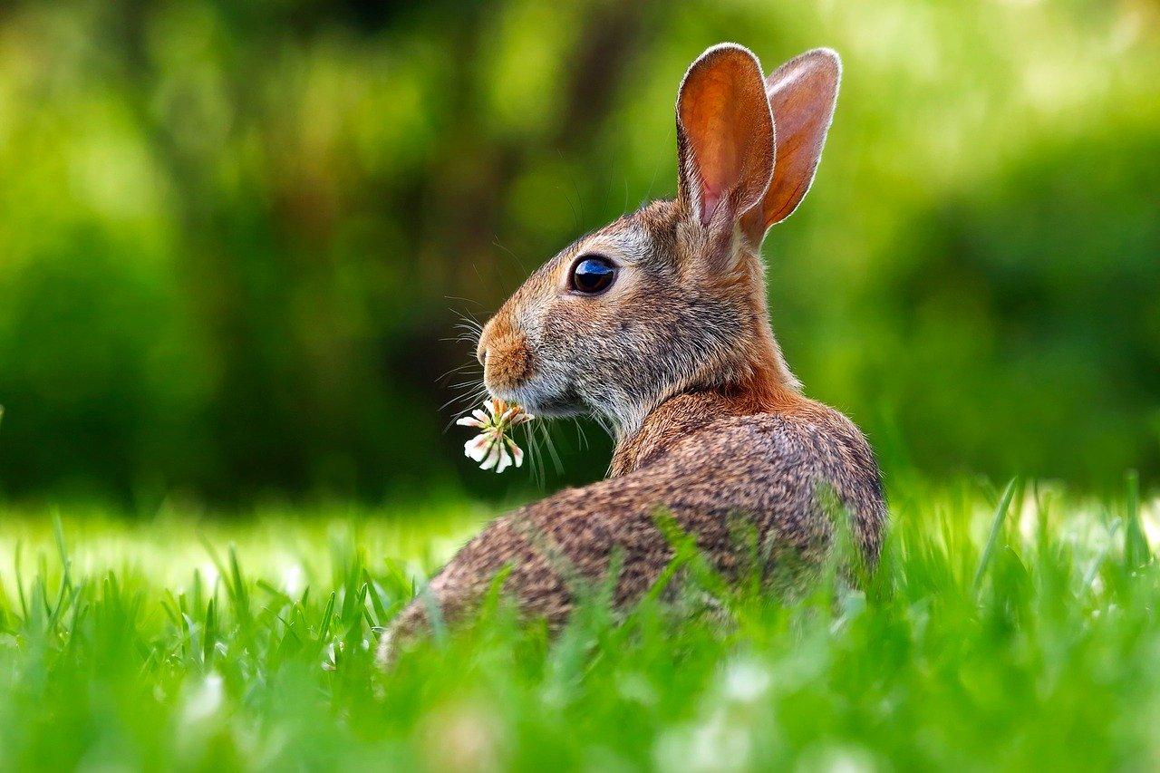 Un lapin dans une prairie