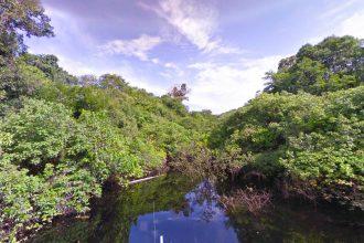 L'Amazonie, le poumon de la planète
