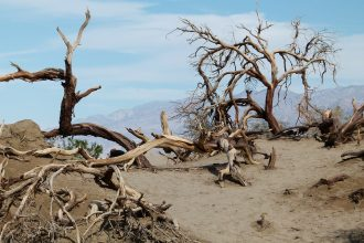 Un paysage de la Vallée de la Mort