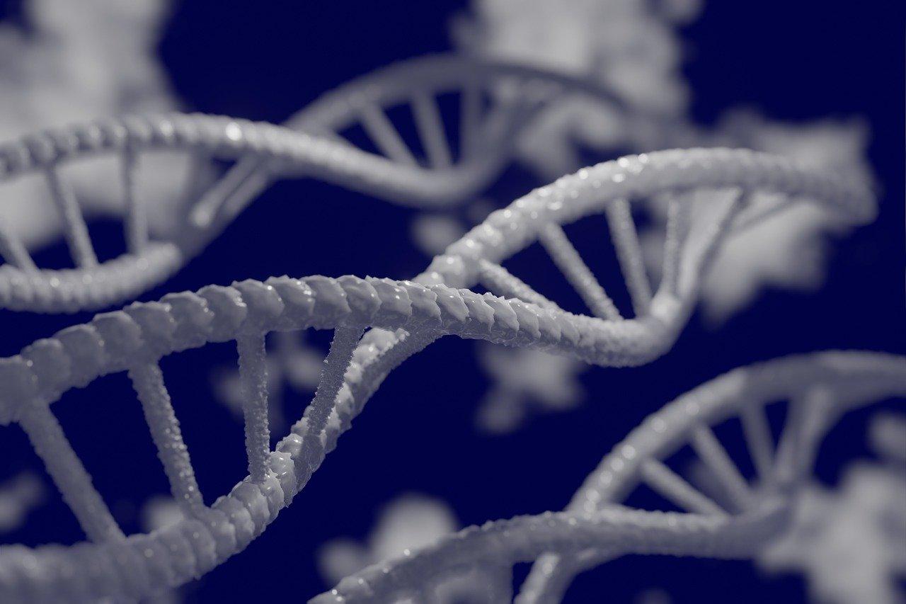 Photos de brins d'ADN