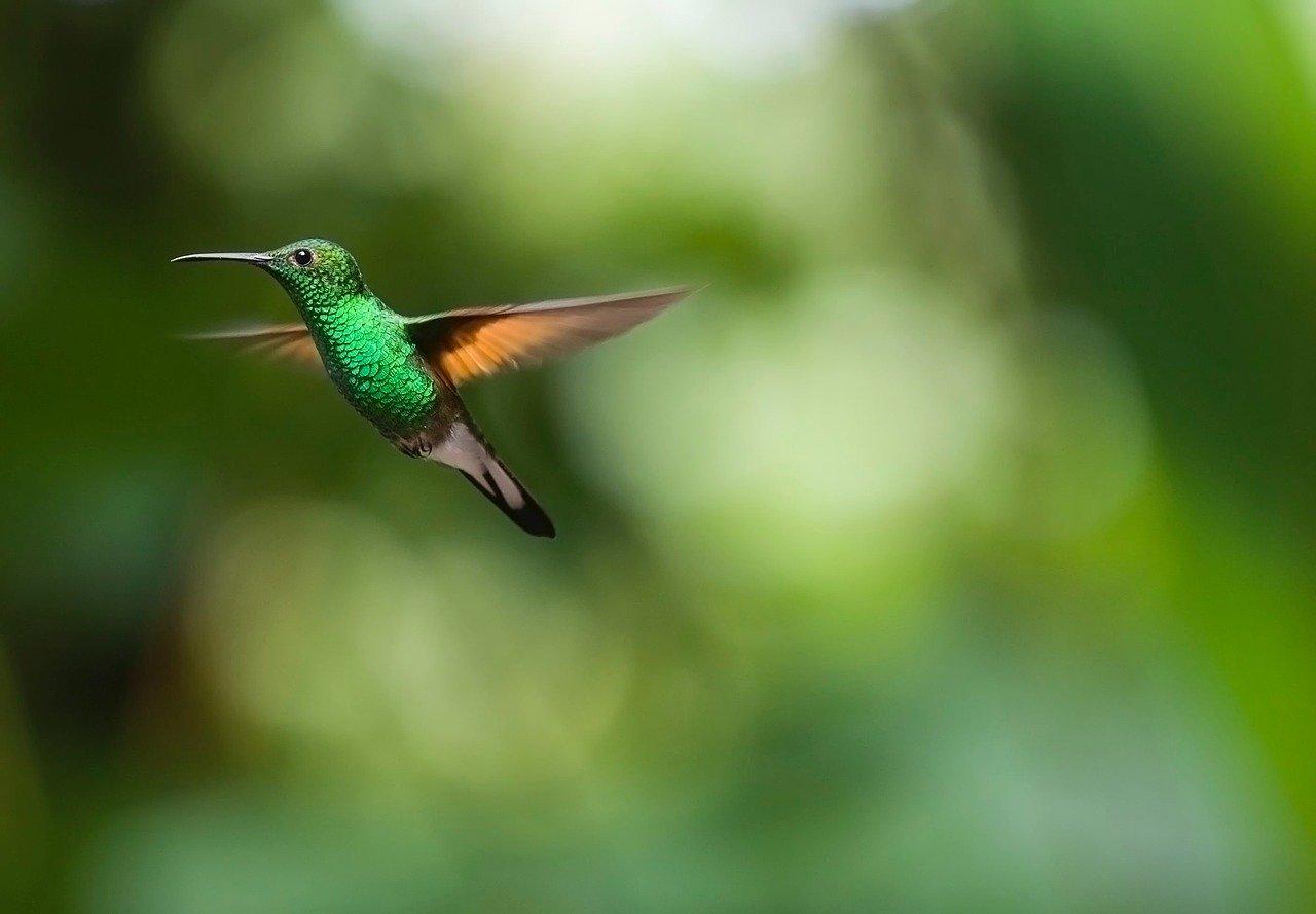 Photo d'un oiseau-mouche