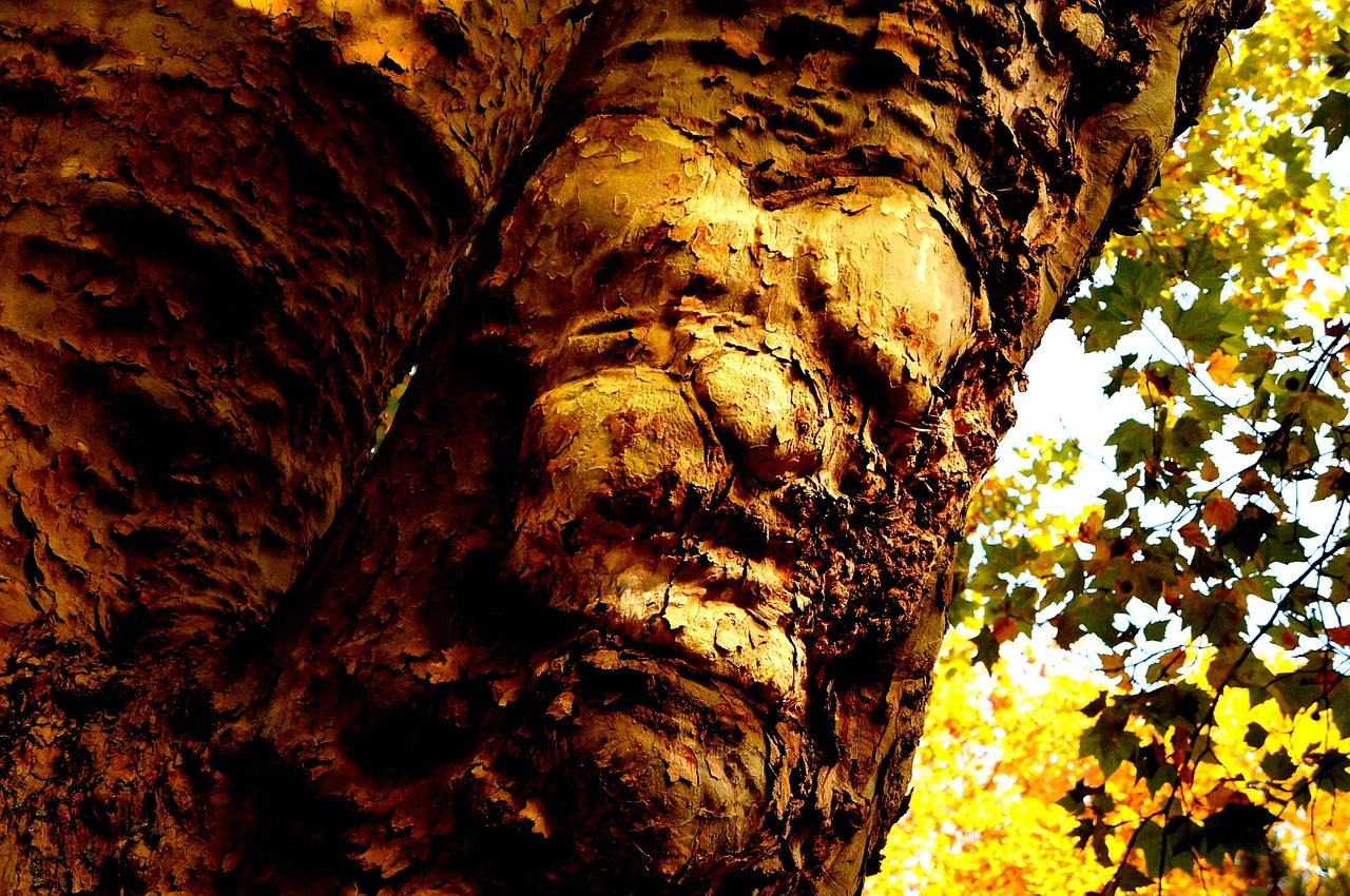 Photo de l'écorce d'un arbre avec un semblant de visage