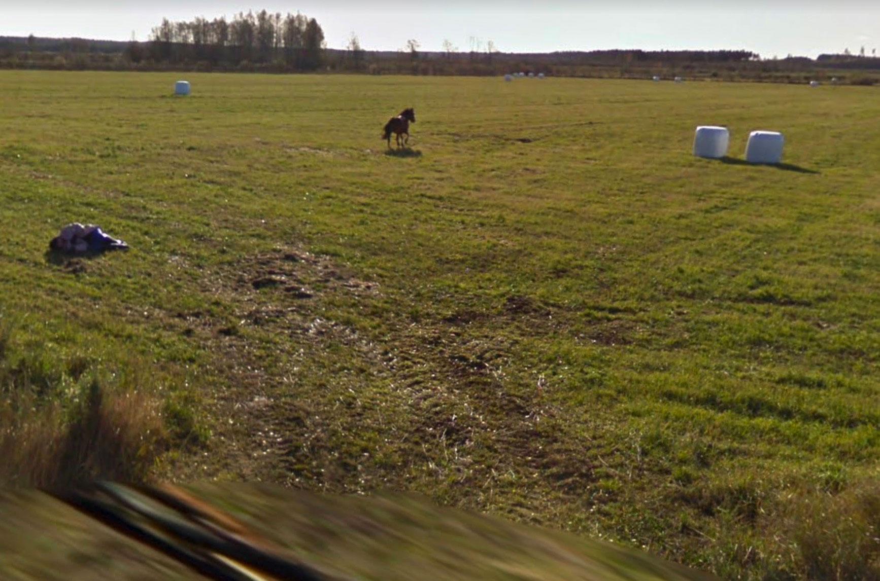 Il semblerait que ce cavalier ait été jeté au sol par sa monture, et ce alors même qu'une Google Car passait à son niveau
