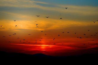 Des oiseaux qui volent au coucher de soleil