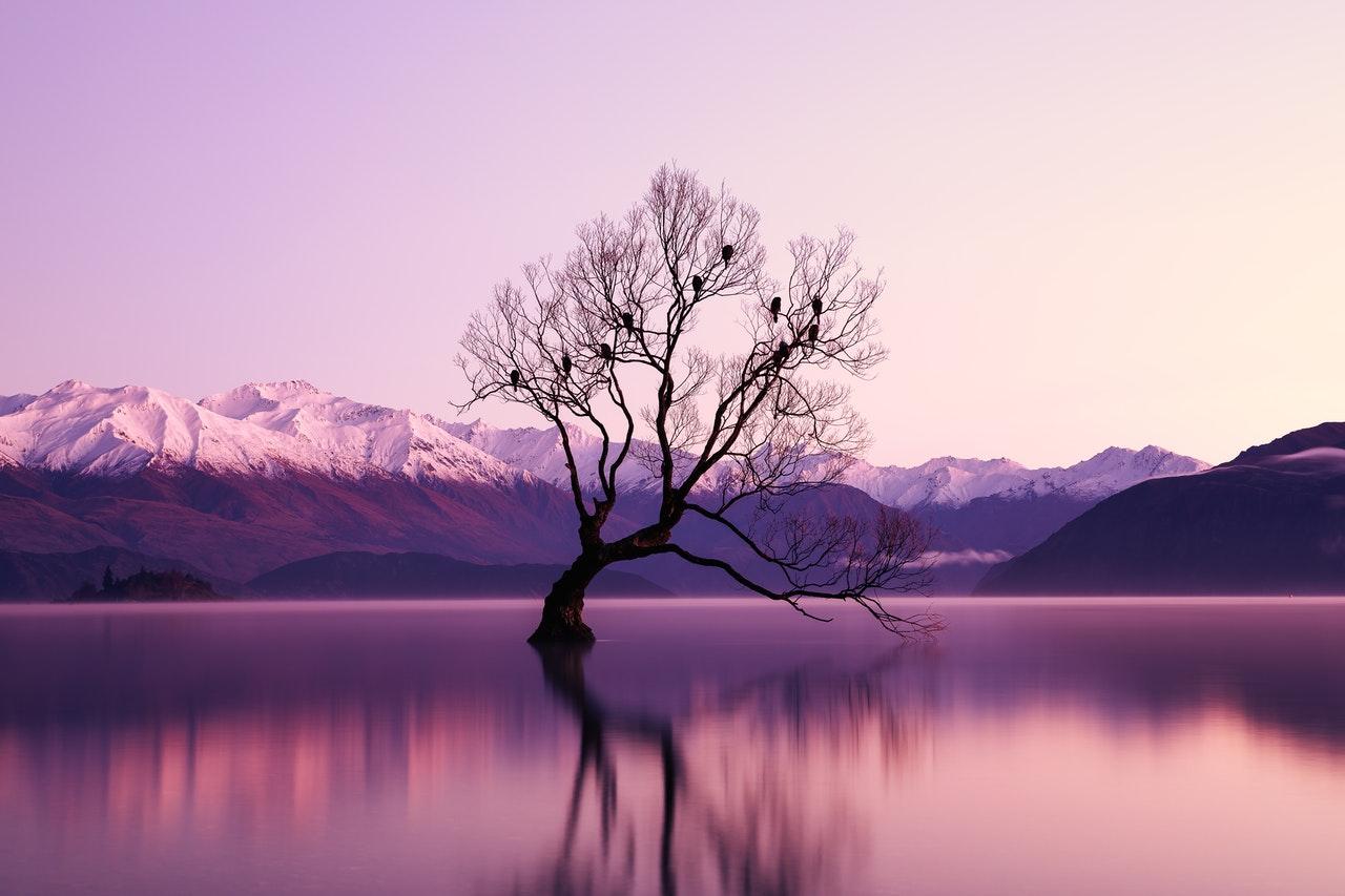 Un lac dont les eaux semblent rose