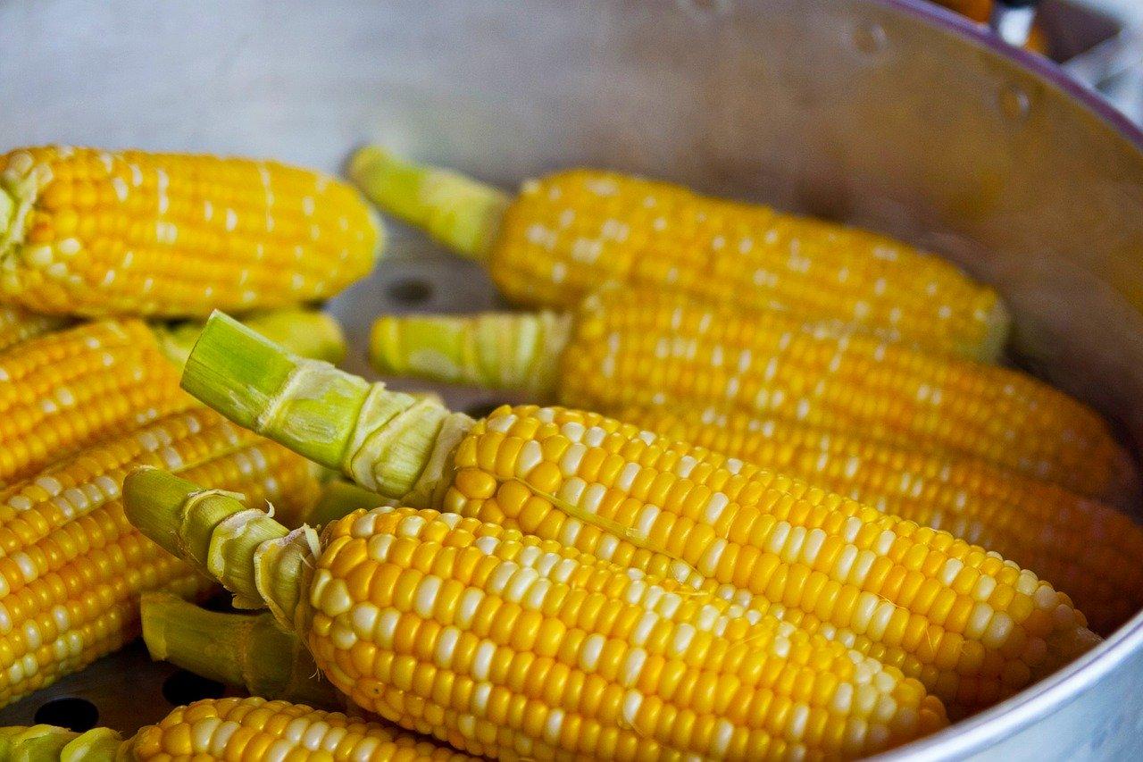 Quelques épis de maïs