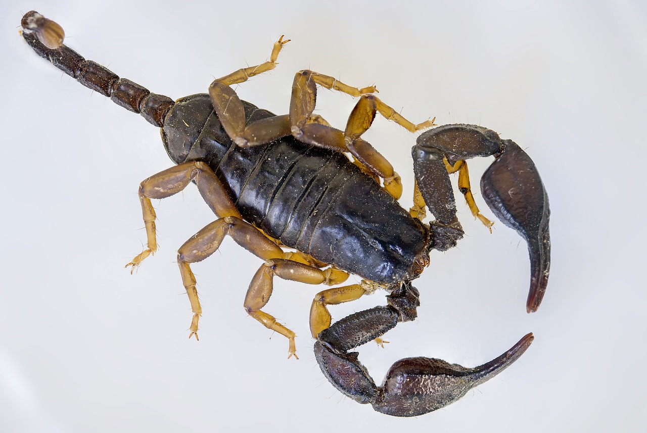 Photo d'un scorpion