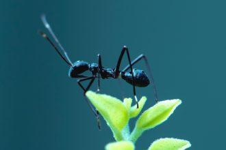 Une fourmi sur une feuille