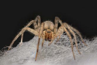 Une araignée à l'affût sur sa toile