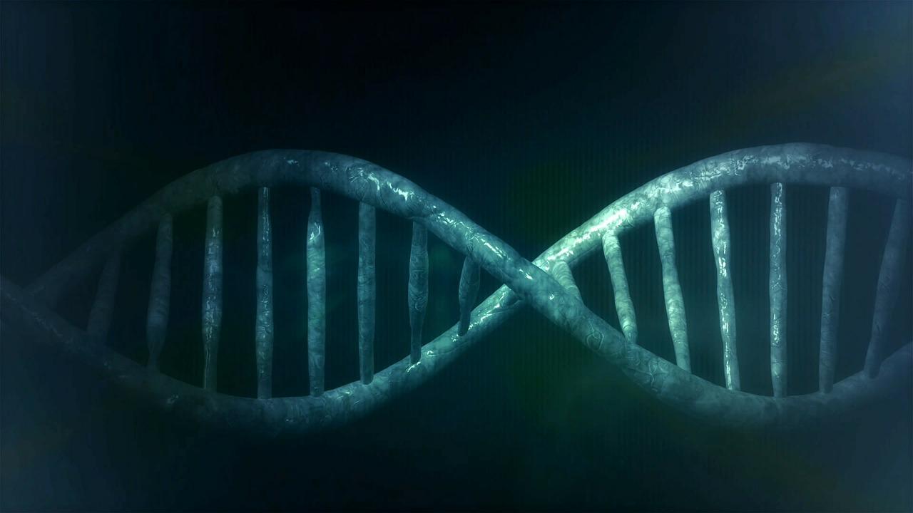 L'hélice de l'ADN