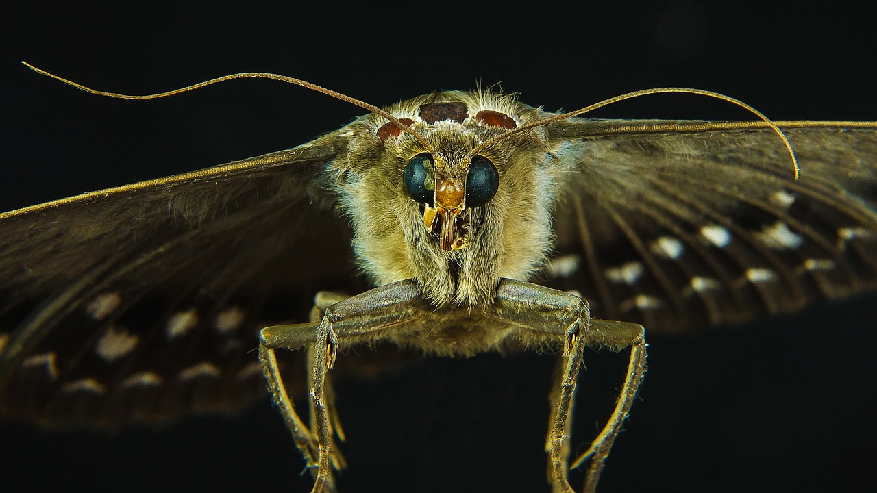 Un papillon en train de voler la nuit