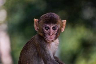 Un petit singe