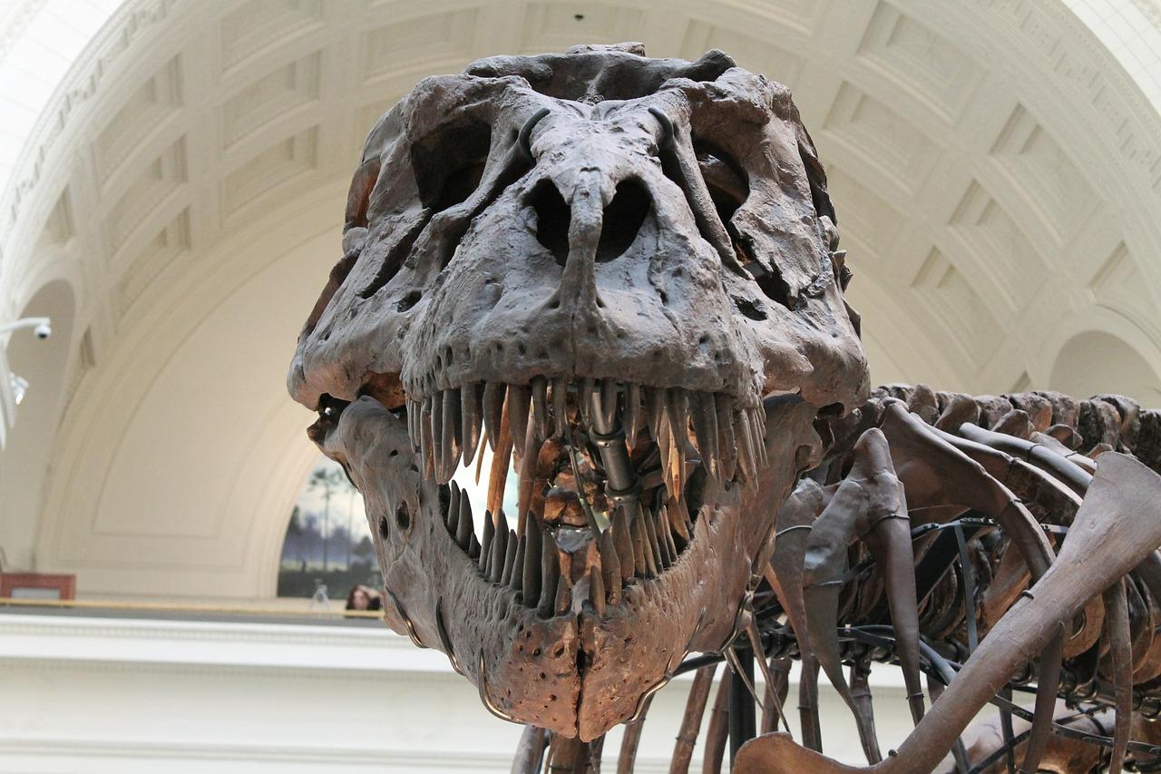 La tête fossilisée d'un dinosaure