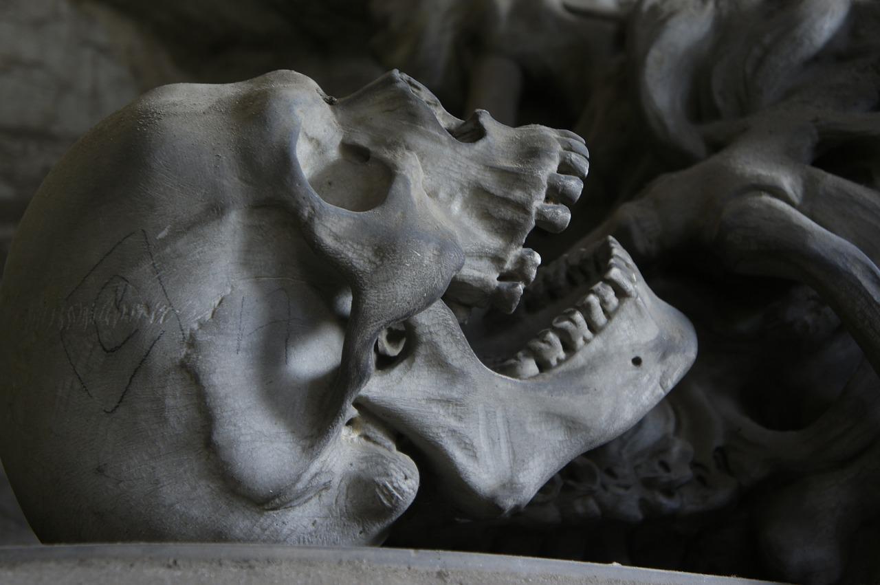 Photo d'un crâne