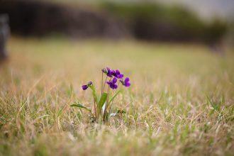 Une fleur dans un pré