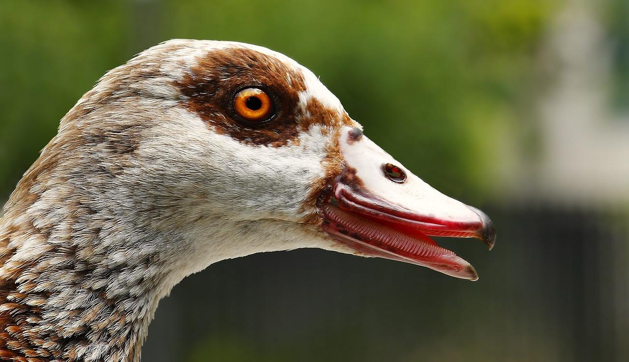 La tête d'un oiseau