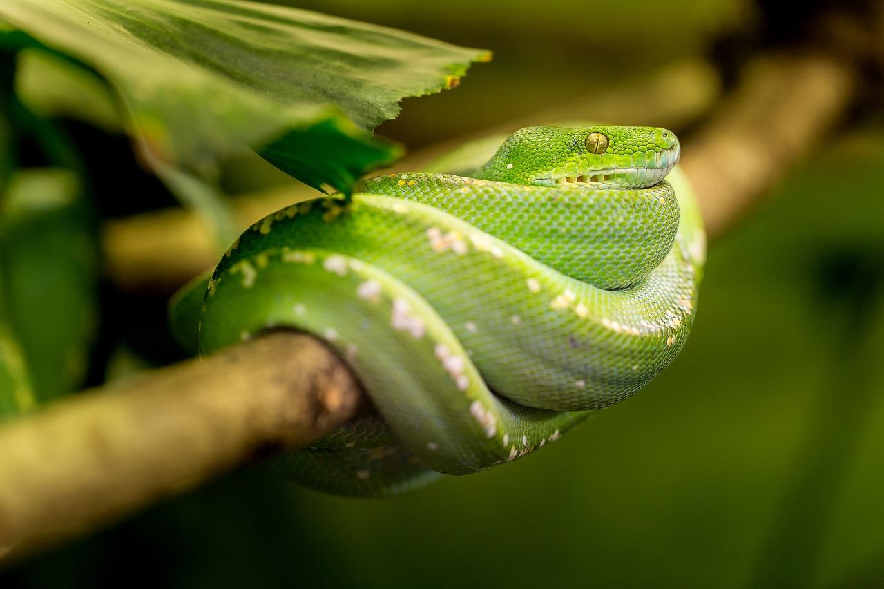 La photo d'un serpent