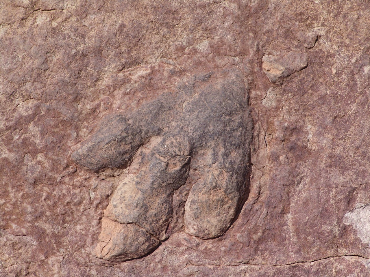 Une empreinte fossilisée de dinosaure