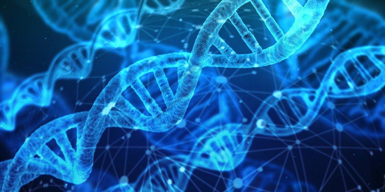 De l'ADN