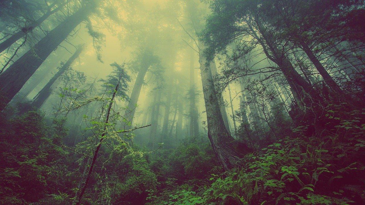 Une forêt sous la brume