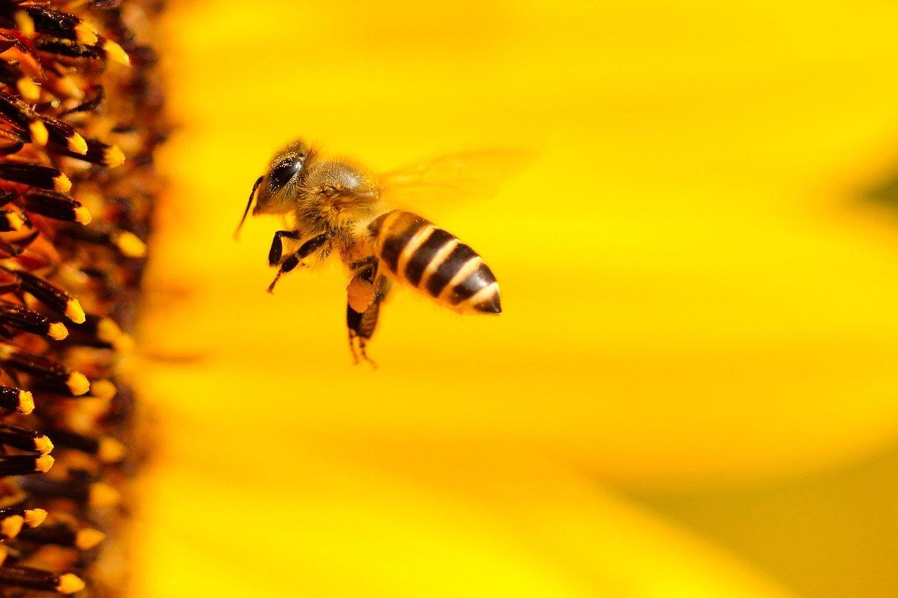 HIIVE, une ruche pas tout à fait comme les autres