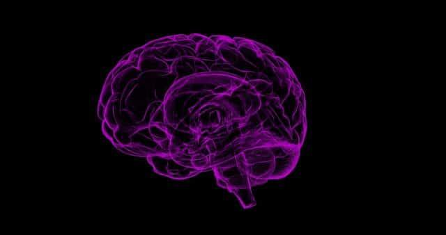 L'illustration d'un cerveau