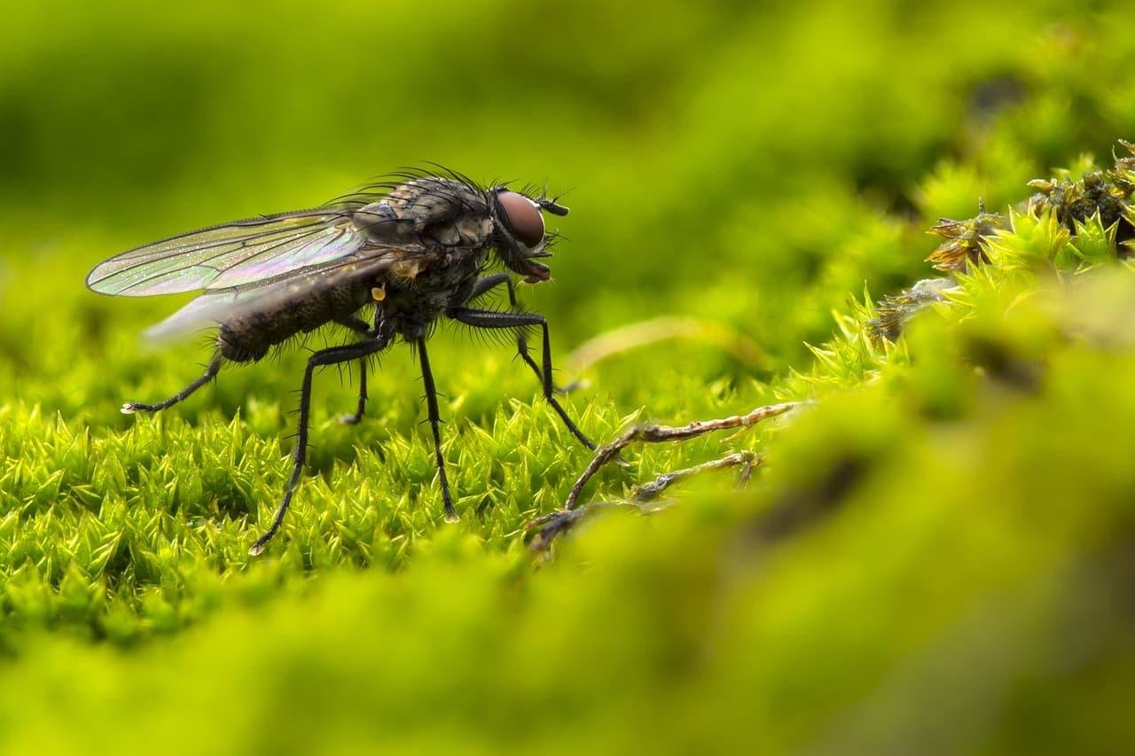 5 astuces pour se débarrasser naturellement des mouches