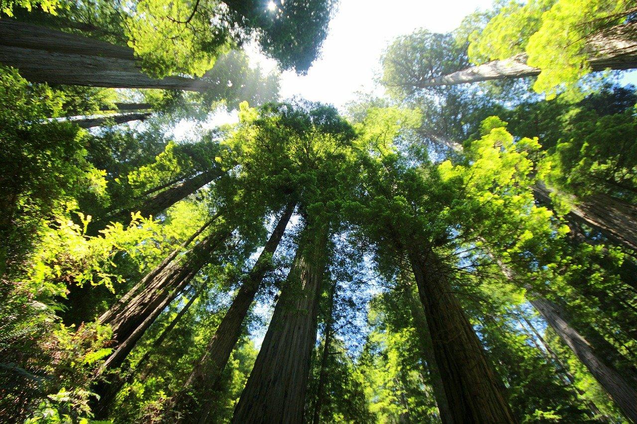 Une forêt verdoyante