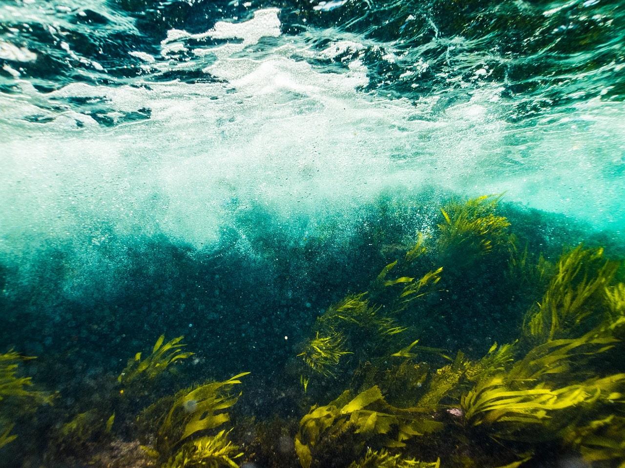 Des algues dans des fonds marins