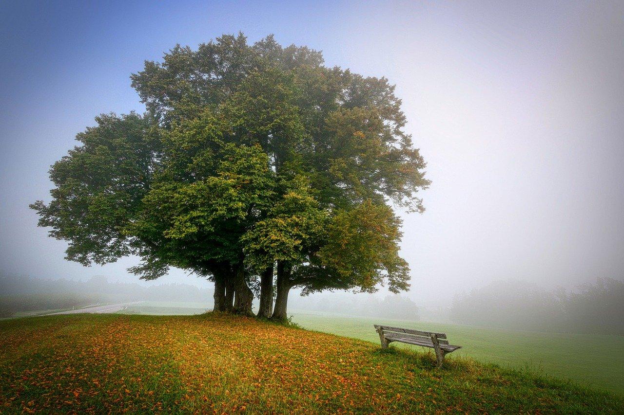 Un arbre situé sur une colline