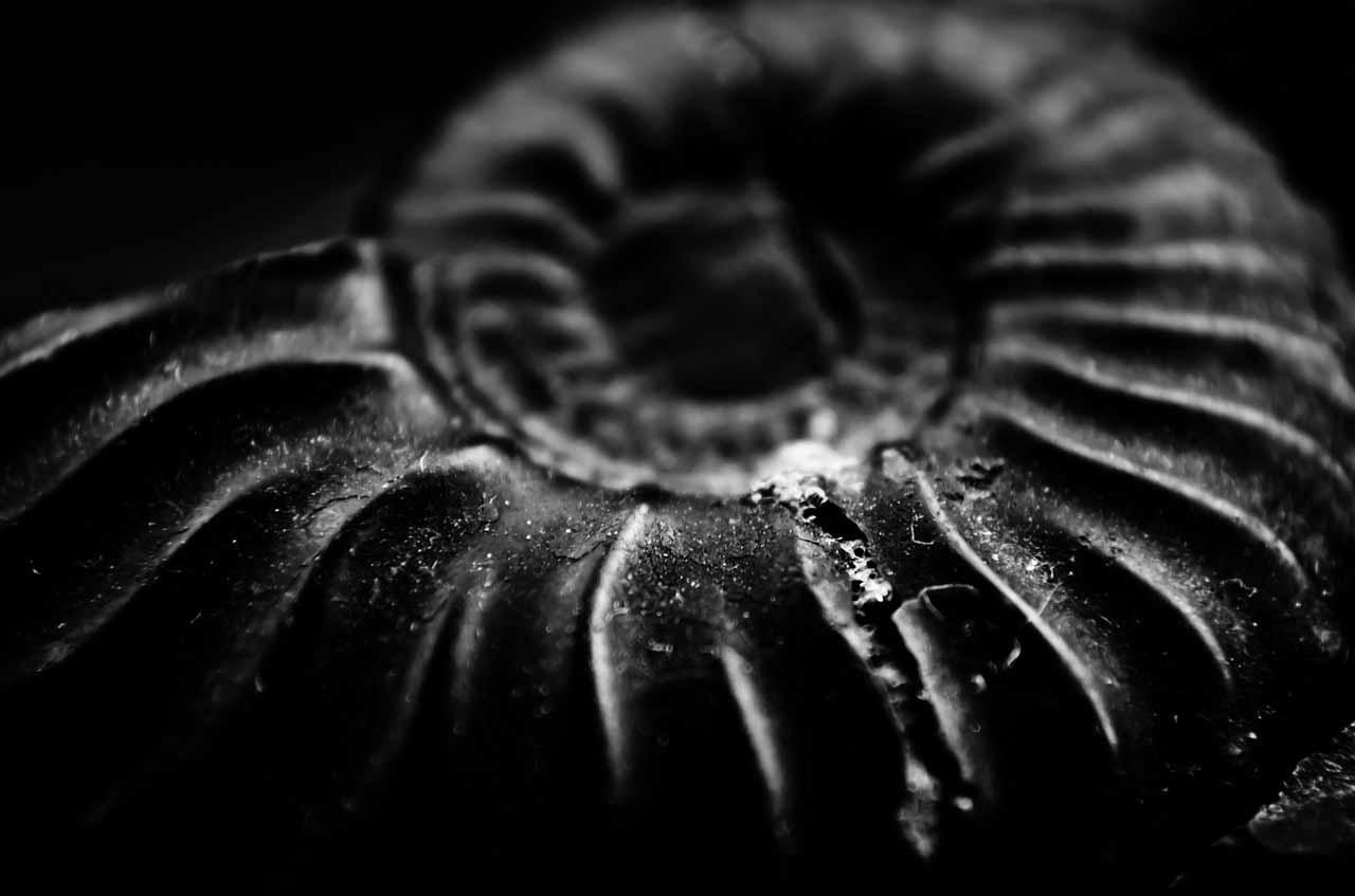 La photo d'un fossile