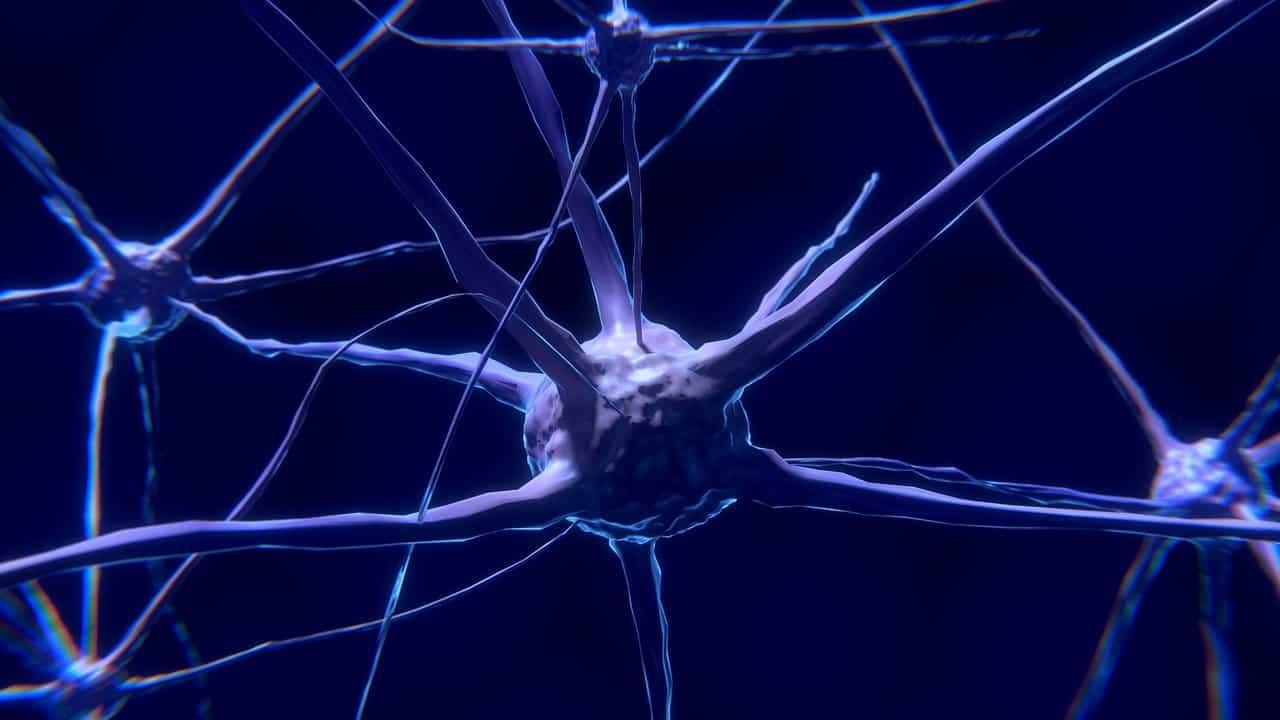 La photo d'un neurone
