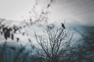 Un corbeau sur un arbre
