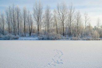 Une photo de la forêt sibérienne enneigée