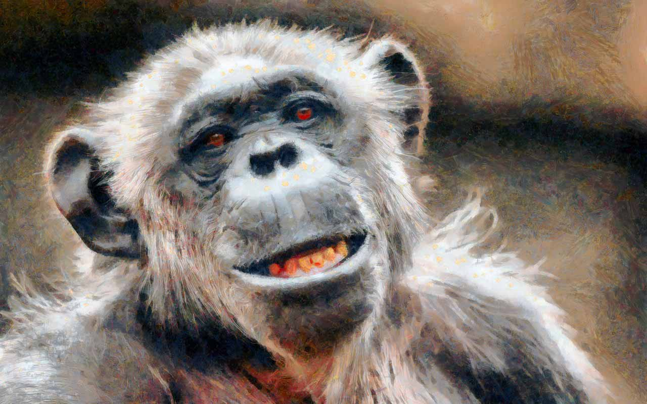 La photo d'un chimpanzé