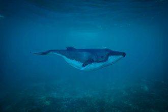 Le dessin d'une baleine