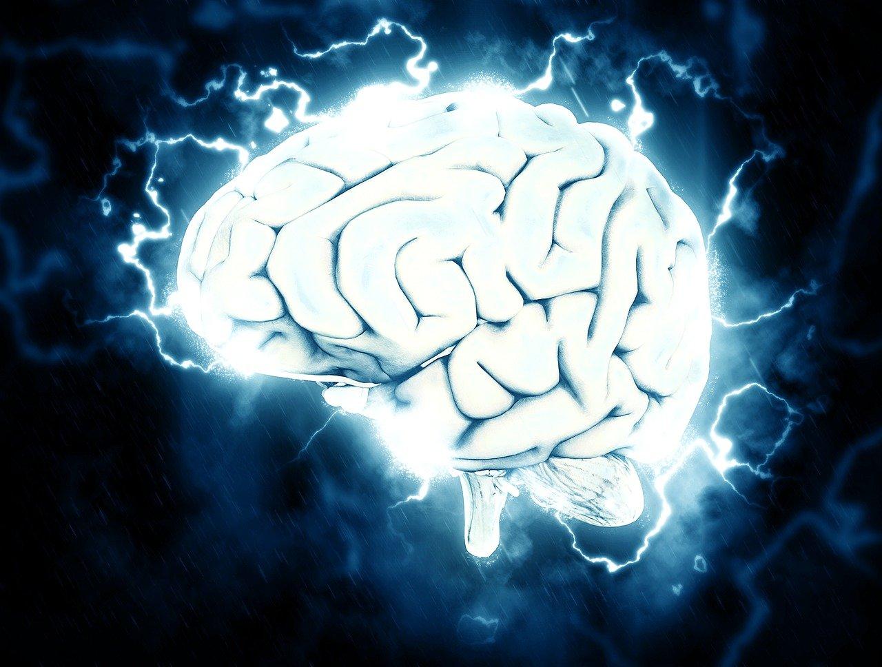 Une photo représentant un cerveau