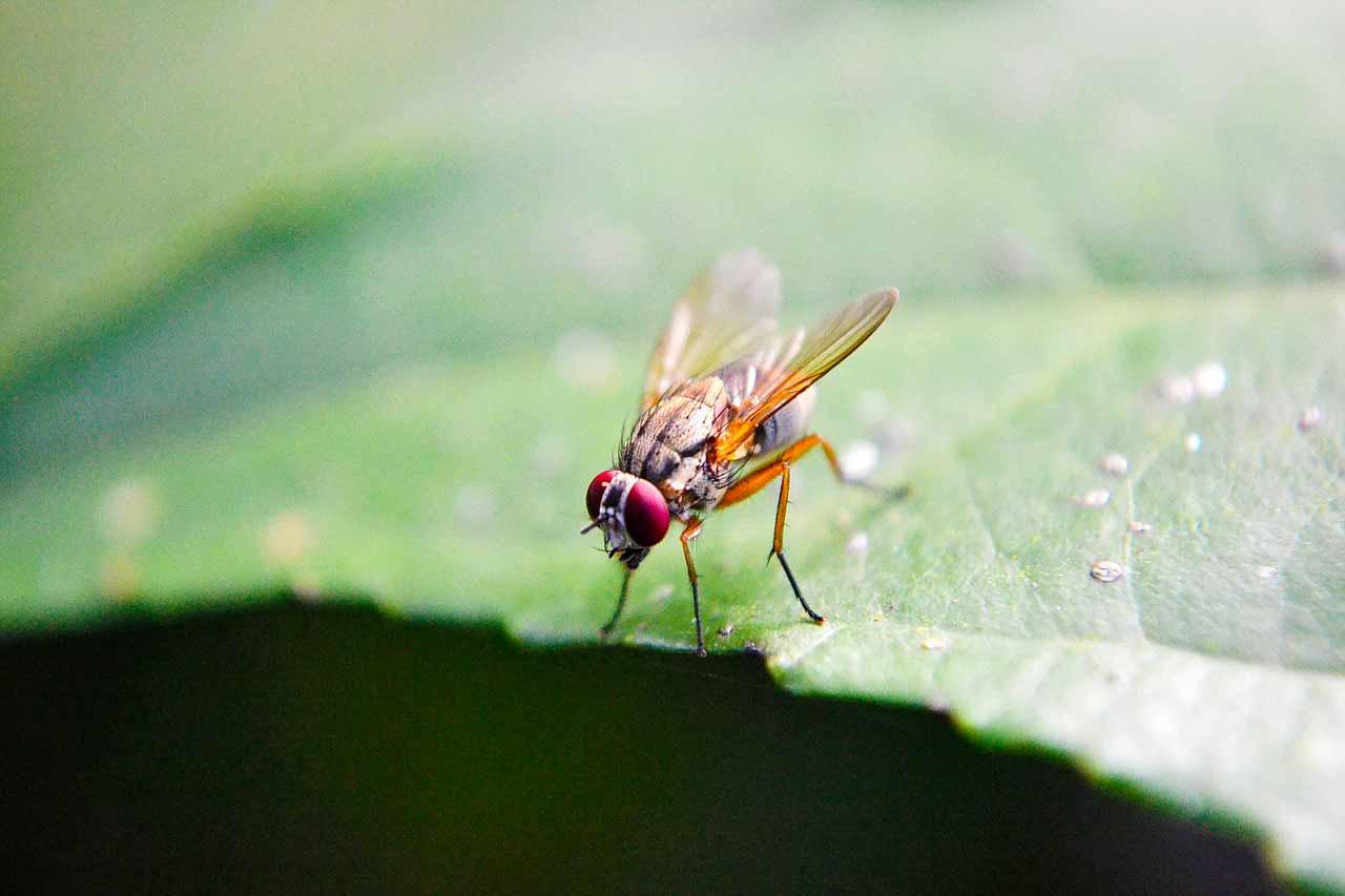 Une mouche posée sur une feuille