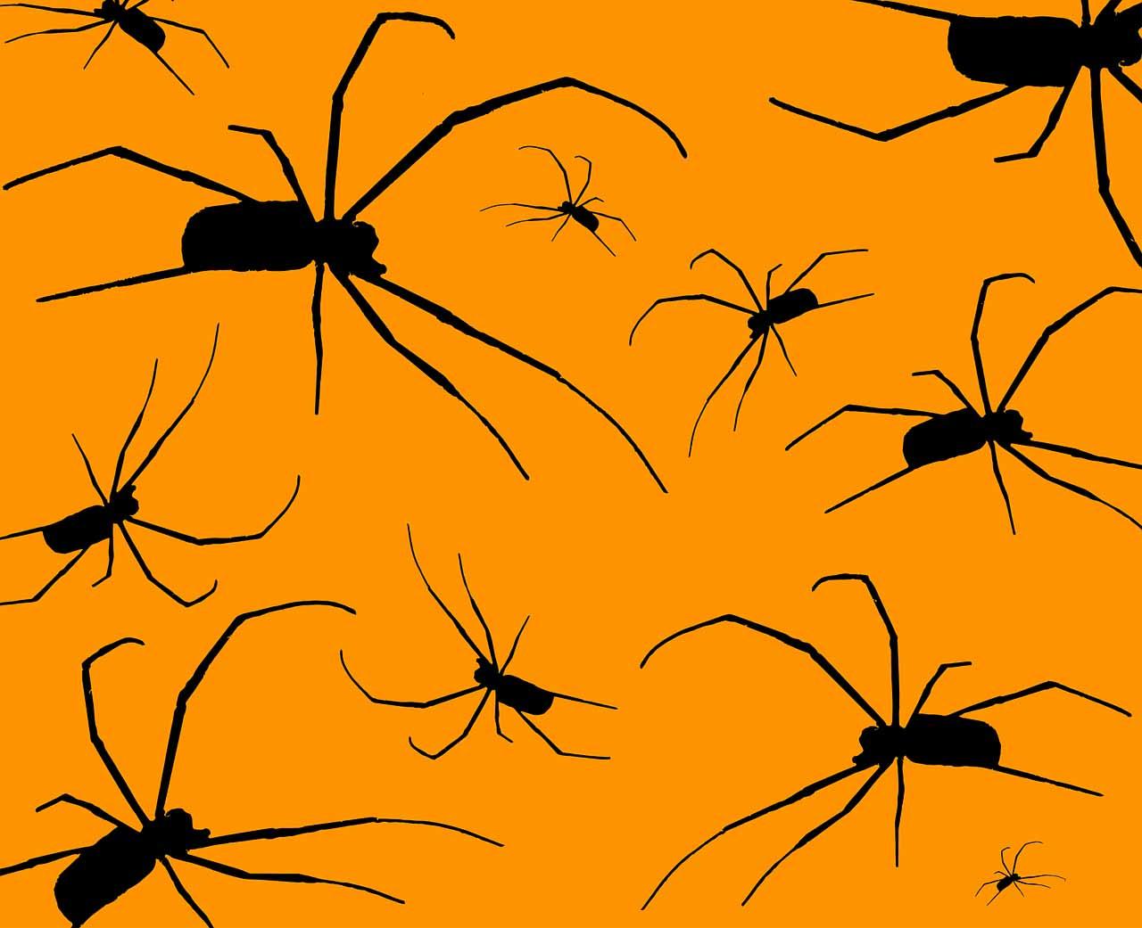 Des araignées en illustration