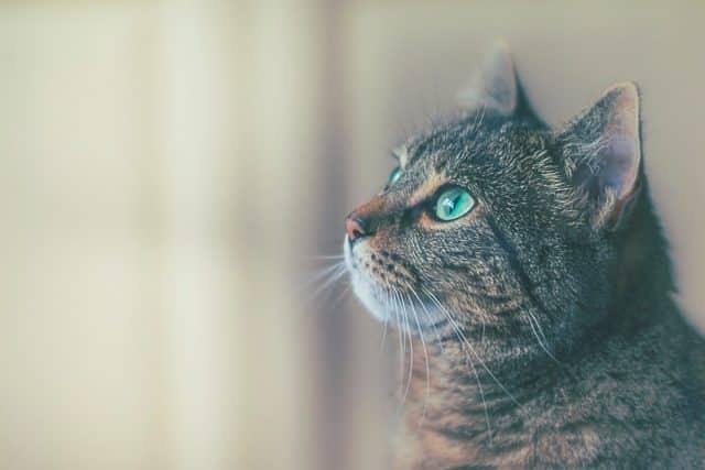 Un chat à la fenêtre