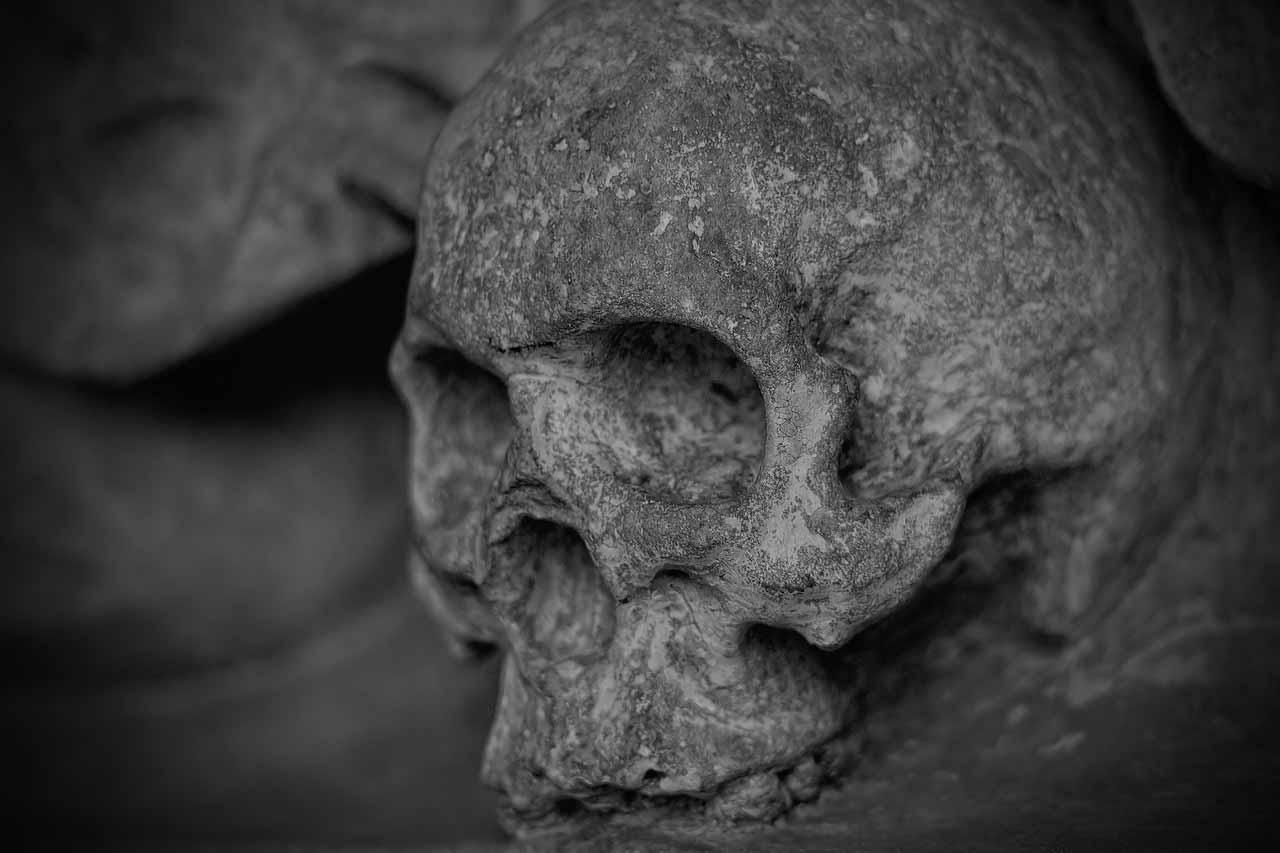 Un crâne pris en photo
