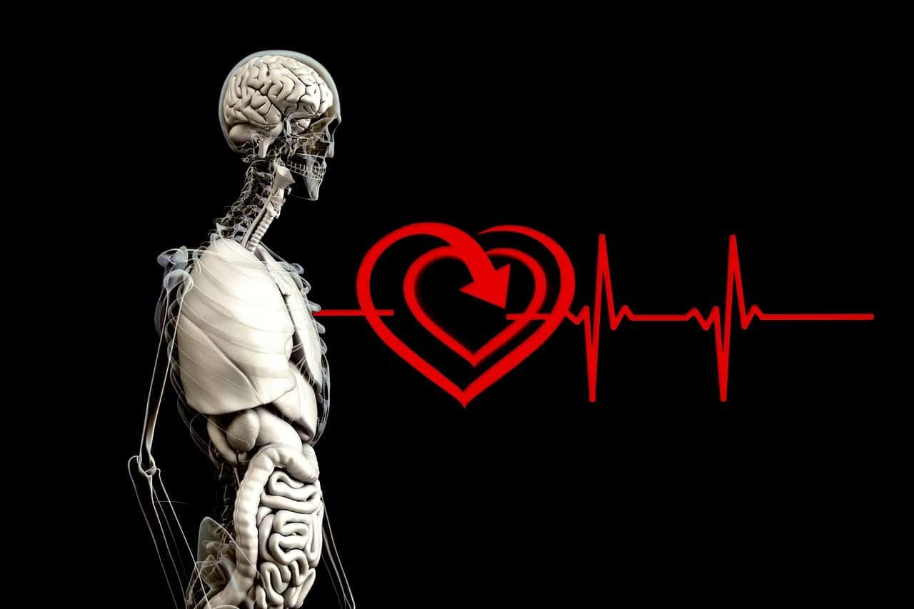 Une image représentant une fréquence cardiaque