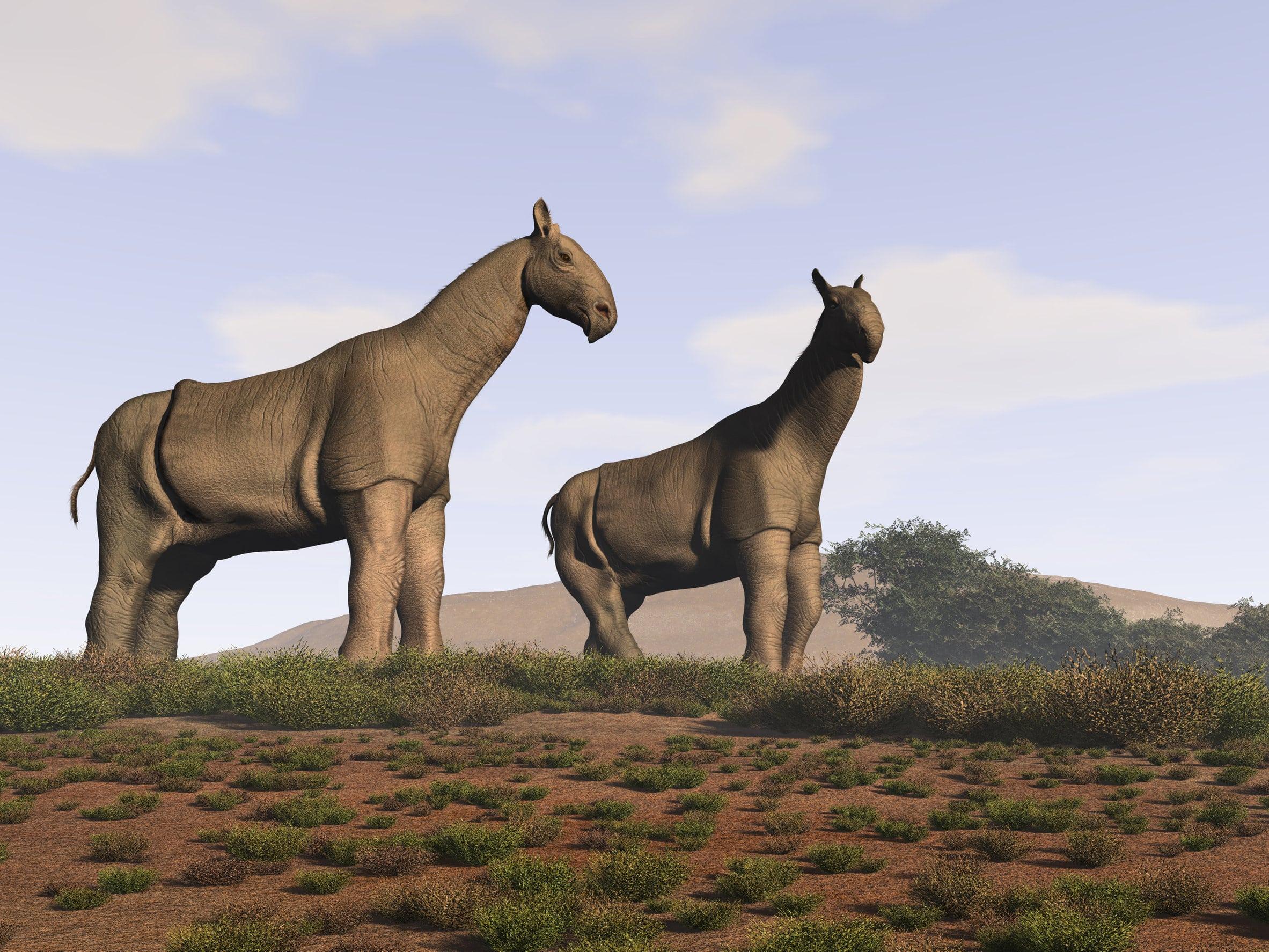 """L'""""extinction perdue"""" qui a fait disparaître plus de 60% des mammifères africains"""